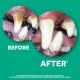 Dentifrice Gel pour chien - Tropiclean Oral care GEL Clean Teeth