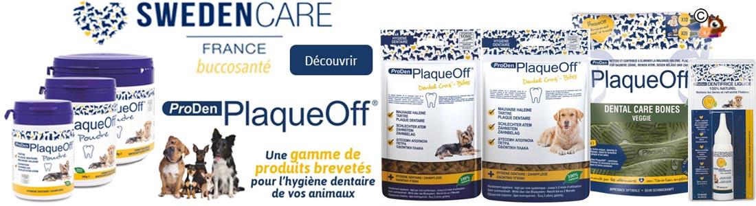 hygiene dentaire pour chien