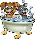 shampooing pour chien et chat