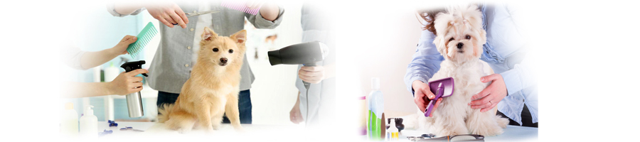 Accessoires Toilettage Chien Matériel Pour Chien En Promotion